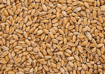 This is an image of Whole Wheat