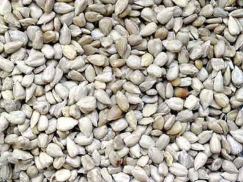 This is an image of sunflower hearts seed