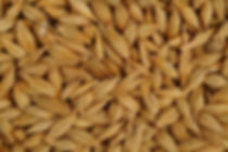 This is an image of Whole Barley