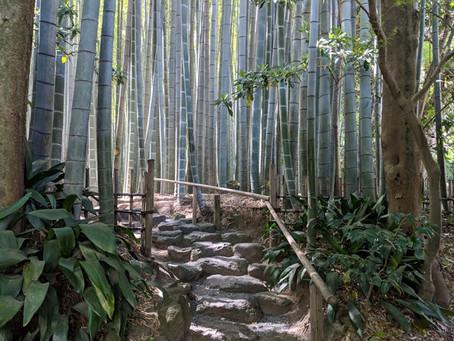 Mantenimiento: entresaca de cañas en bambusales
