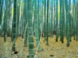 plantacion de bambu