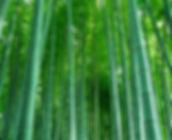 biomasa bambu
