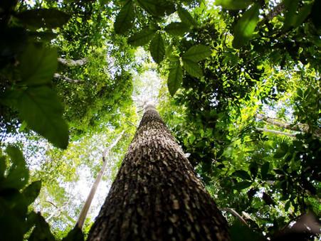 Amazônia pelos seus moradores