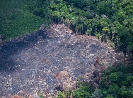 Qual tem sido o impacto da Covid-19 no setor de uso da terra?