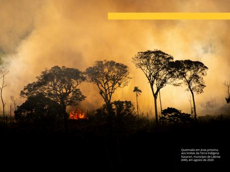 Ação pela prevenção do desmatamento chega ao STF