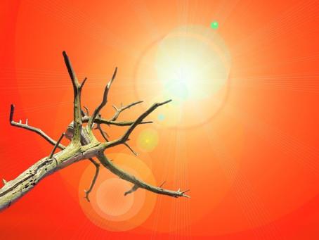 Emergência climática e emergência da litigância climática