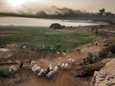 Relatório sobre uso da terra indica oportunidades e responsabilidades para o Brasil