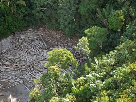 Desmatamento na Amazônia contribui com crises hídrica e energética