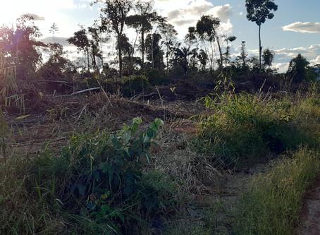 Amazônia diante da pandemia