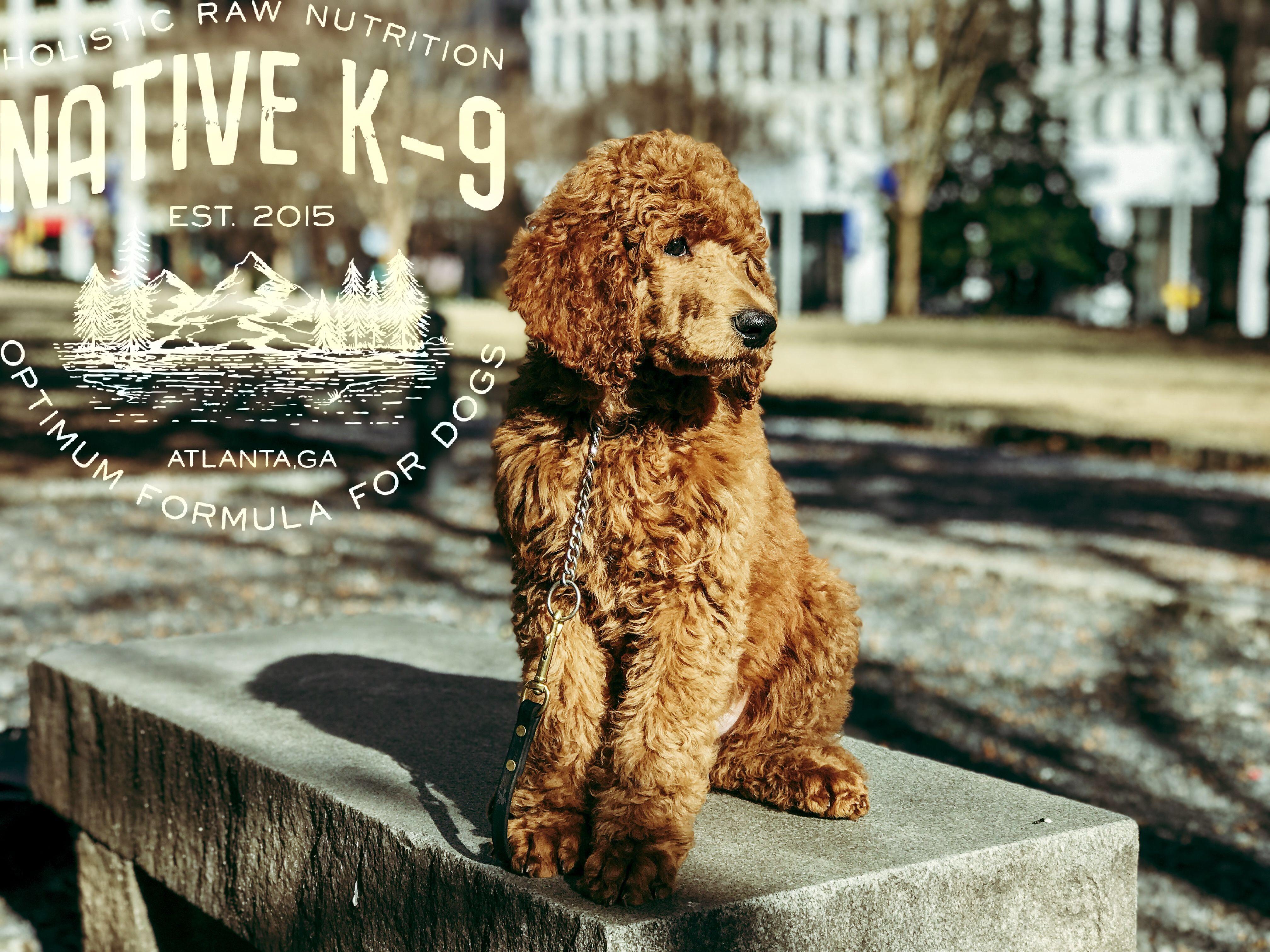 Dog Trainer | Native K9 Training | Atlanta, Ga