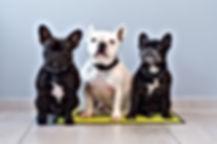 Tchaï, Gucci et Lilo, Mascottes du Cabinet Vétérinaire des Terreaux, à domicile