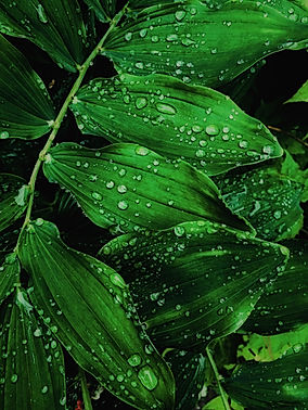 close-up-dew-drops-of-water-2473990.jpg