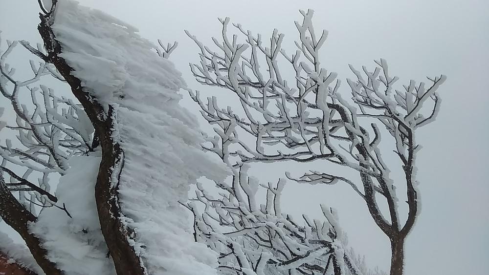霧氷や樹氷