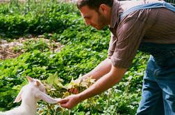 Çiftlik Keçi