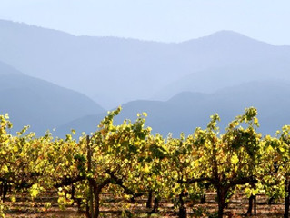 """Nectar of the Gods: California Wines in """"Because You're the First"""""""