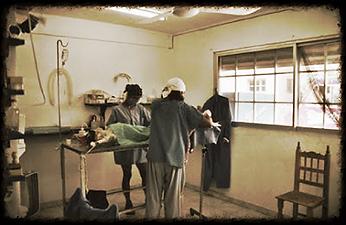 Vet Clinic Isla