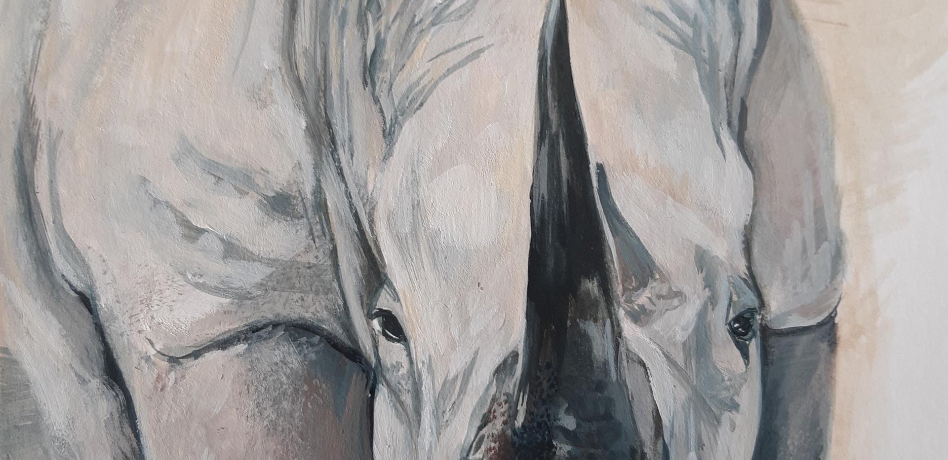 Rhino's nose