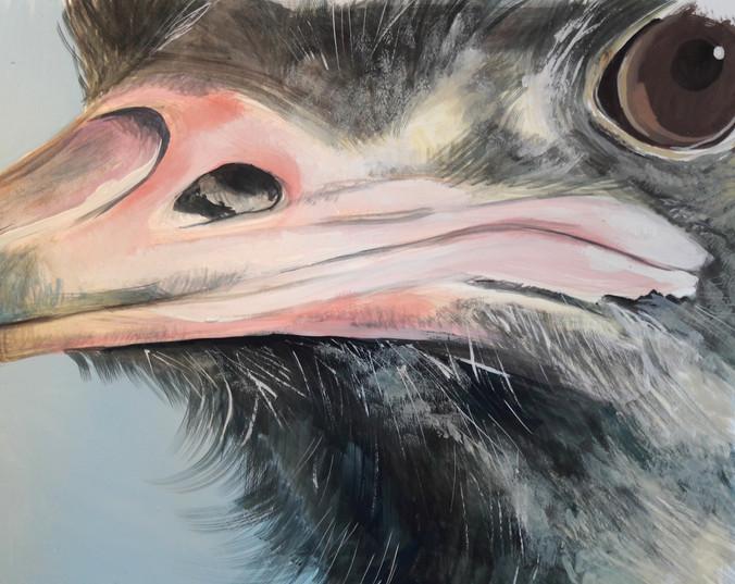 Emu's nose