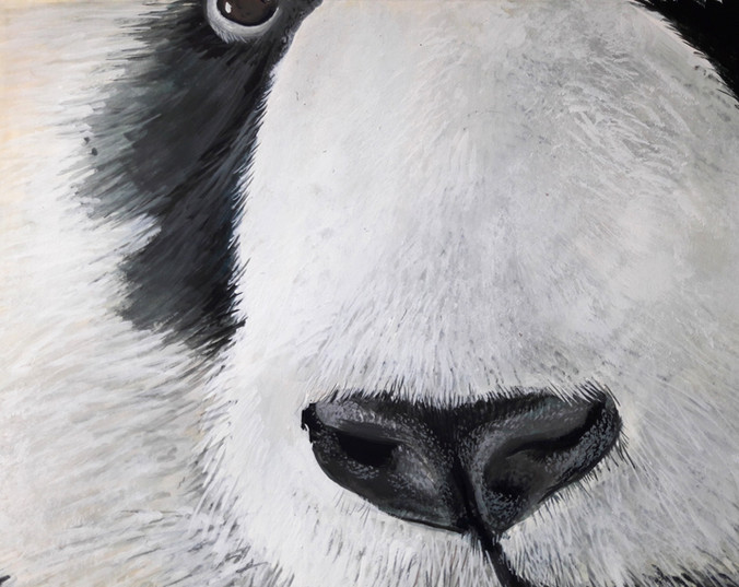 Panda's nose