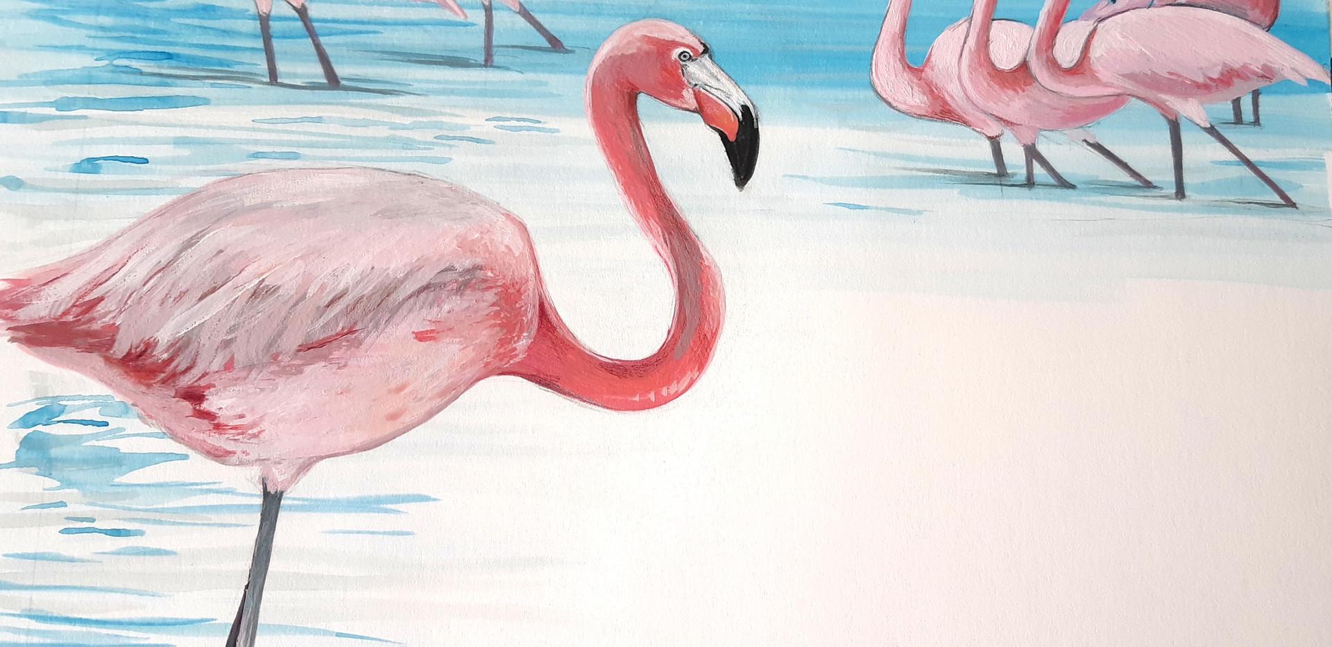 Flamingoes illustration