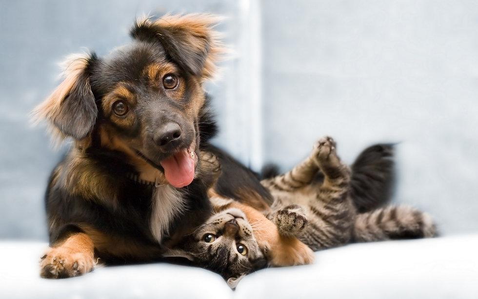 51 (Собака, кошка, друзья).jpg