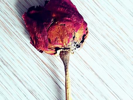 Beschnittene Rosen