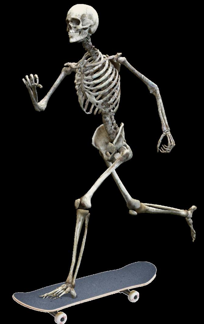 thumbnail_skeleton-3342754_edited.png