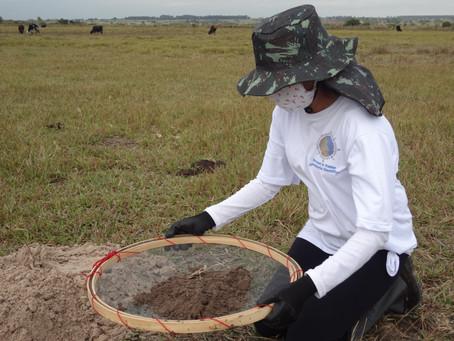 Pesquisas Arqueológicas em Campinal, município de Presidente Epitácio, SP