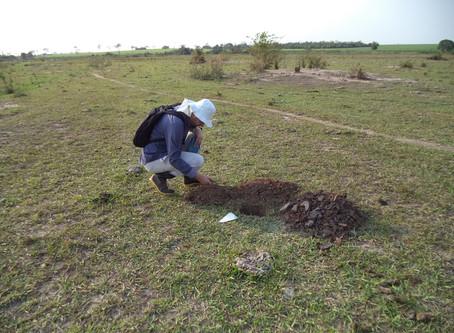 A Fercant & Yahto realiza estudos de Arqueologia preventiva em Paulicéia, SãoPaulo