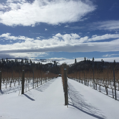 winter vineyard 2.JPG