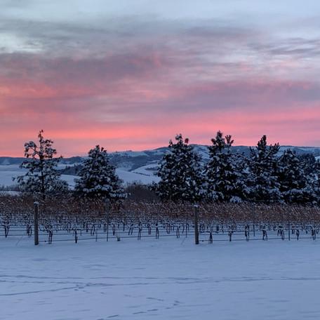 Vineyard at winter sunset.jpg