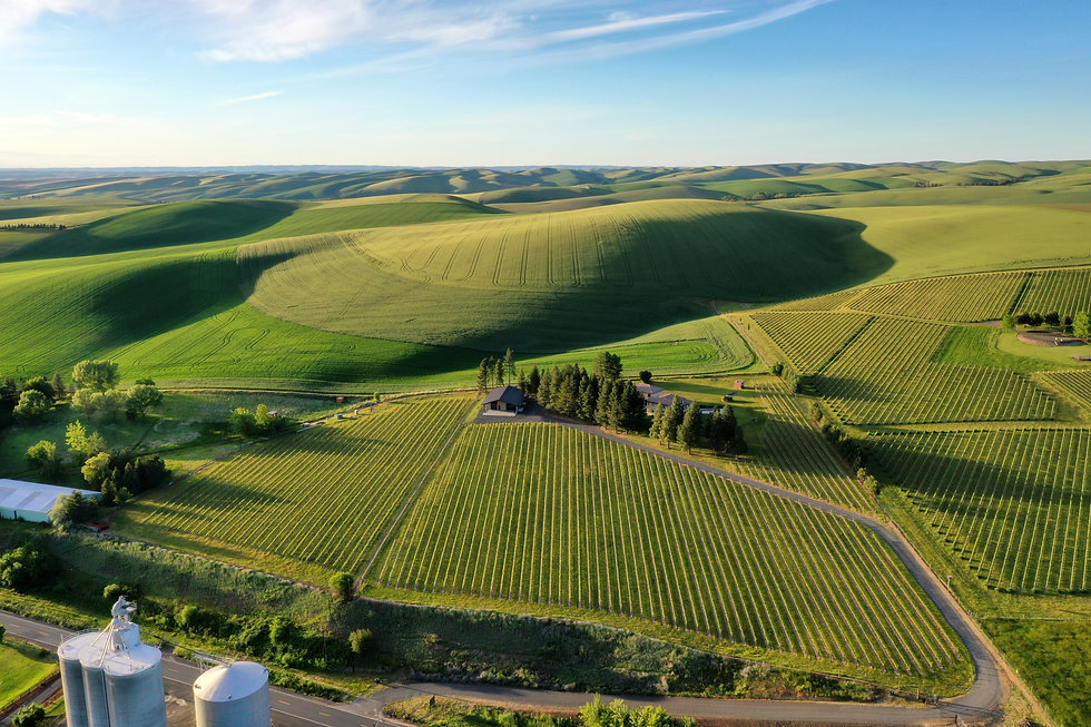 vineyard picture from drone 2020.jpg