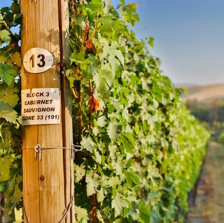 Vineyard end post.jpg