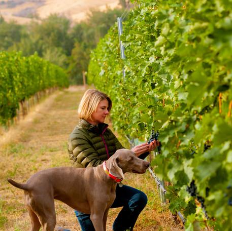 08-31-16-3764Kelly and Skye Vineyard.jpg