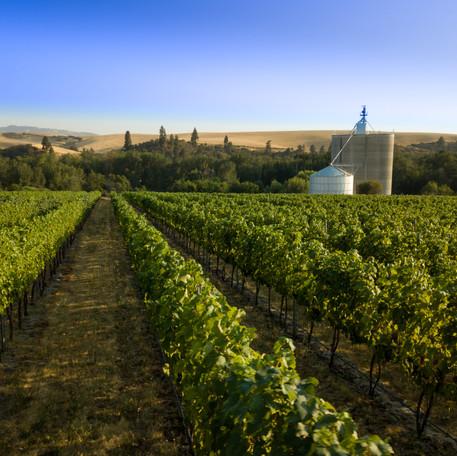 vineyard shot.jpg