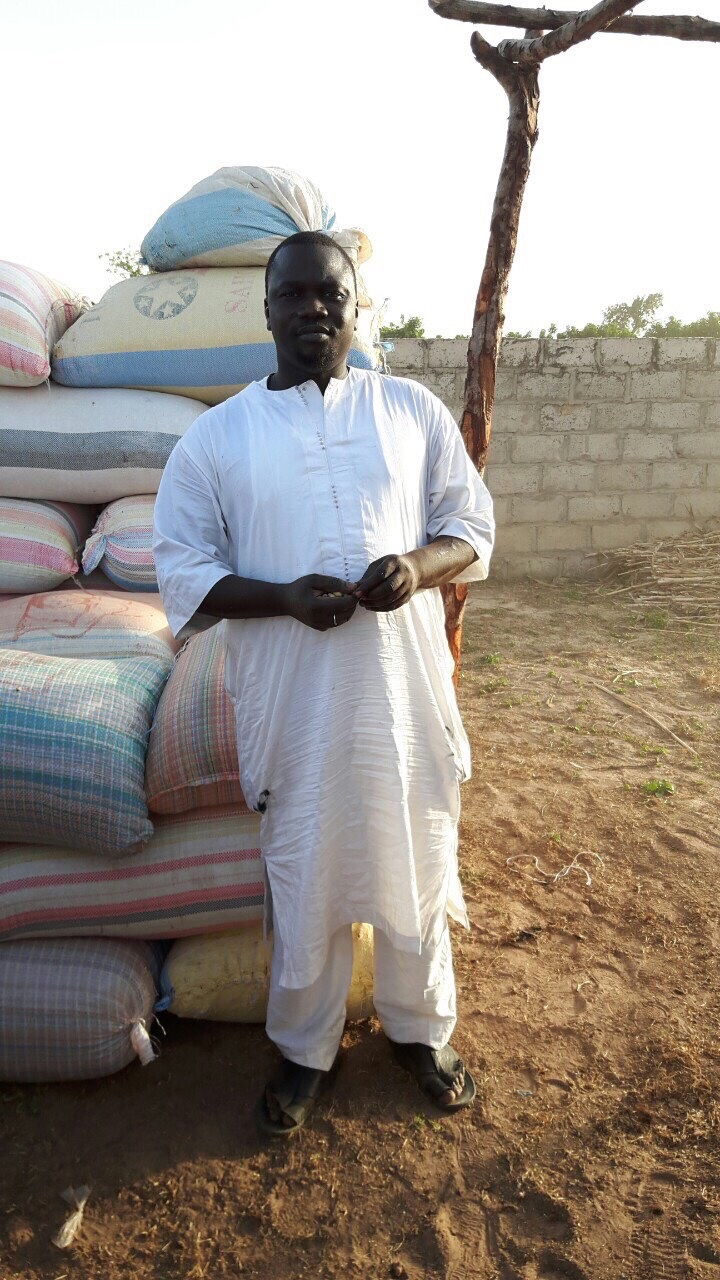 Peanuts harvested from Cisse Niass Project Farm_