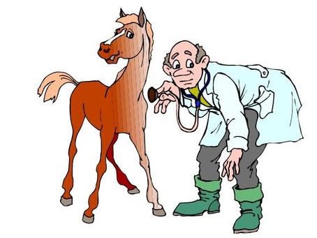 Влияние денникового содержания на здоровье лошади. ХОБЛ.