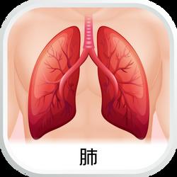 EHC_SubCat_aw_肺
