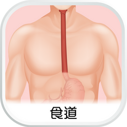 EHC_SubCat_aw_食道