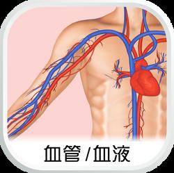 EHC_SubCat_aw_血管