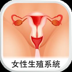 女性生殖系統