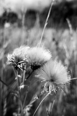 Dad's Meadow (7)