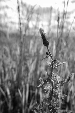 Dad's Meadow (4)