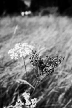 Dad's Meadow (9)