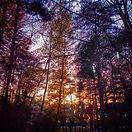 7. November woods.jpg