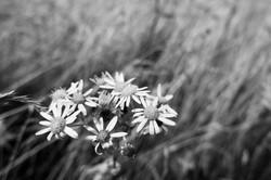Dad's Meadow (8)