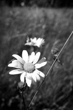 Dad's Meadow (5)