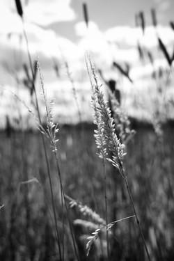 Dad's Meadow (3)