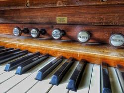 15. Organ detail