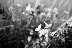 Dad's Meadow (6)